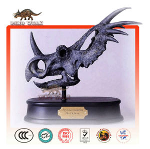 fossiler replik styracosaurus kopf
