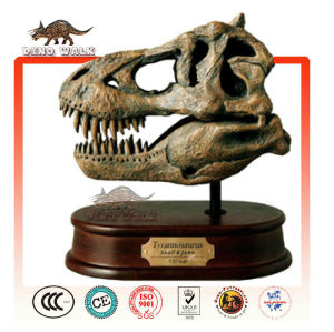 baby tyrannosaurus fósiles de la cabeza de regalo