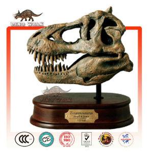 Baby Tyrannosaurus Head Fossil Gift