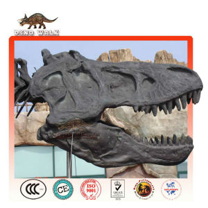 Biggest Tyrannosaurus Head Skeleton