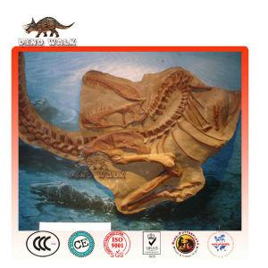 Burial Site Dino Skeleton