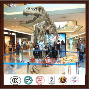 Dinosaur skeleton exhibition in the mall