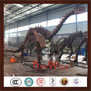 Manufacture  dinosaur skeleton model