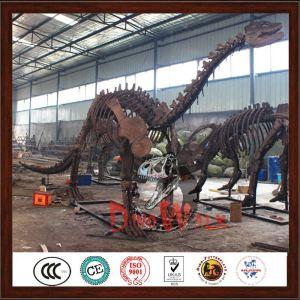 Manufacture  dinosaur skeleton model