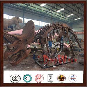 Magic dinosaur fossil for sale