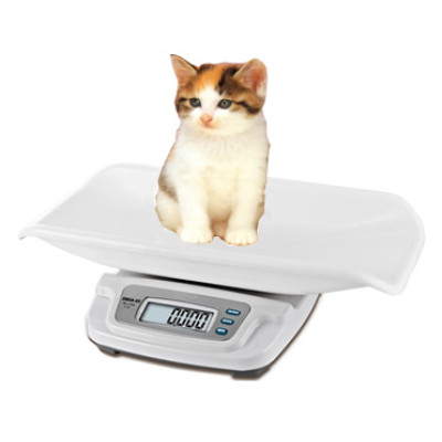 Small pet scale