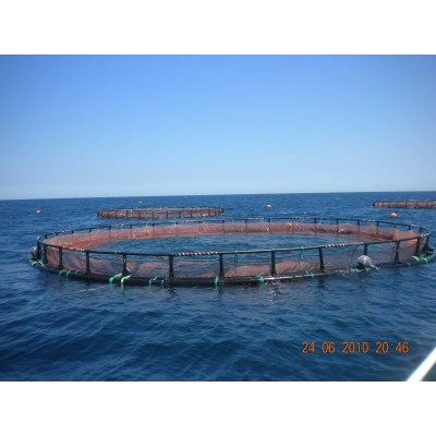 Round Net Cage for Tuna Farming Series