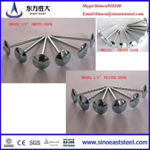 Espiral de clavos de acero galvanizado (fabricante)
