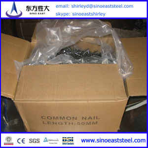concrete nail common nails Factory