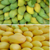 Know mango ripening agent correctly! What is the role of ethephon?