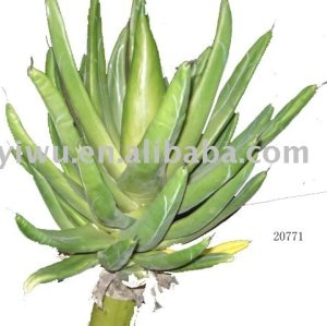 Sell Artificial Aloe
