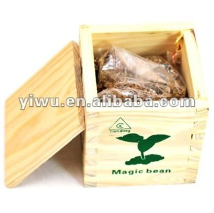 wooden box magic growing beans