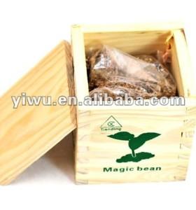 wooden box magic growing beans