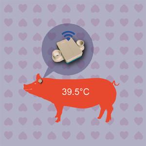 母猪发情检测仪
