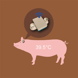 母猪分娩监测仪