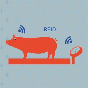 猪场RFID称重仪