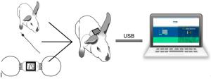 兔鼠试验动物植入式体温测量表记录仪。可穿戴方式体内体核皮下基础体温测量