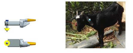羊体温采集耳标