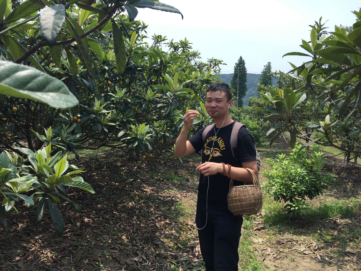 picking loquat