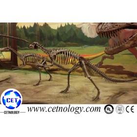 Hot Sale Dinosaur Skeleton Usage in Dinosaur Theme Park