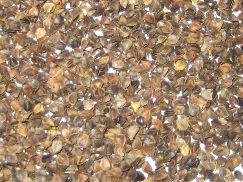 2011 High Quality Buckwheat Hulls Buy Bulk Buckwheat