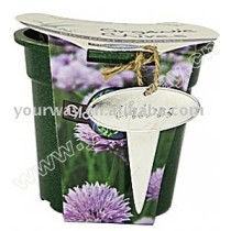 Can flower(eco-friendly pot),mini plant,novelty product