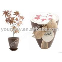 Canned flower,mini flower,promotional gift