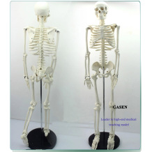 MADICAL HUMAN SKELETON MODEL TEACHING EDUCATIONAL MODEL 85CM HUMAN BONE MODEL-GASEN-GL001