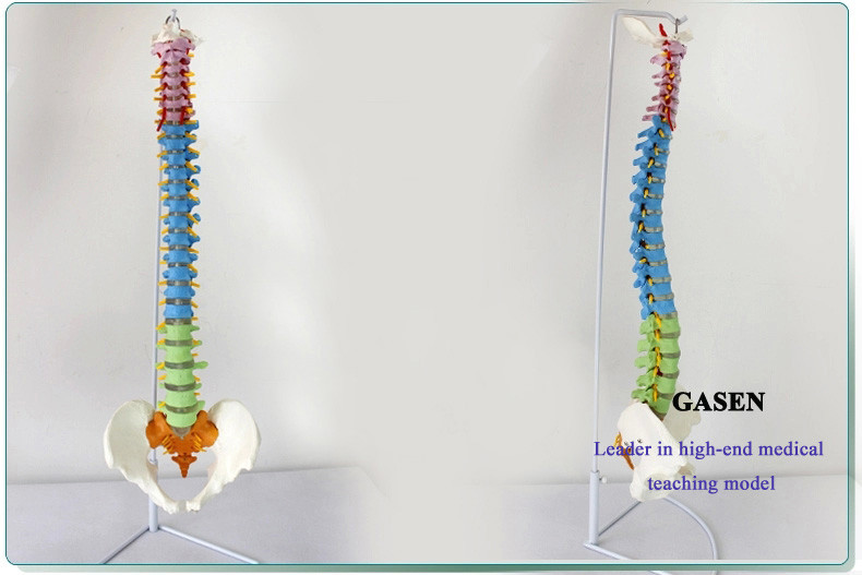 The new spine3