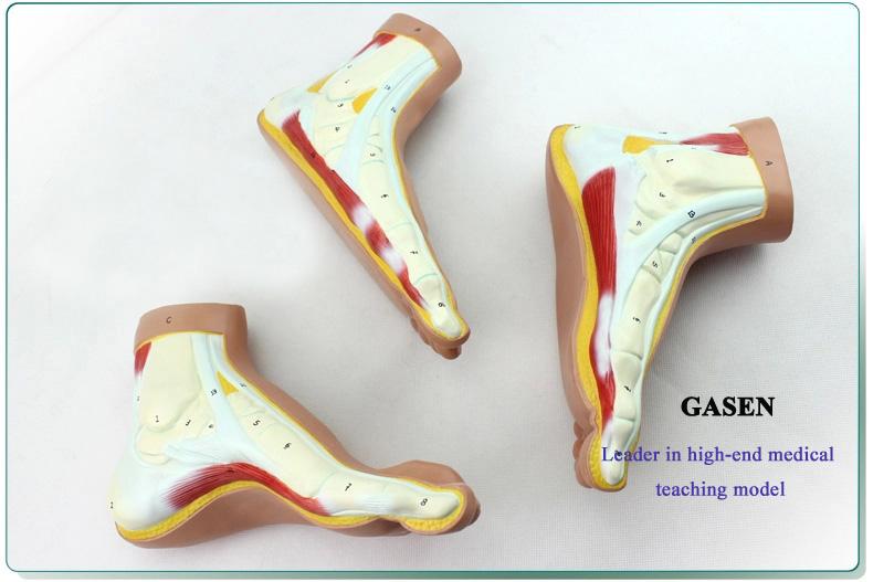 Foot model3
