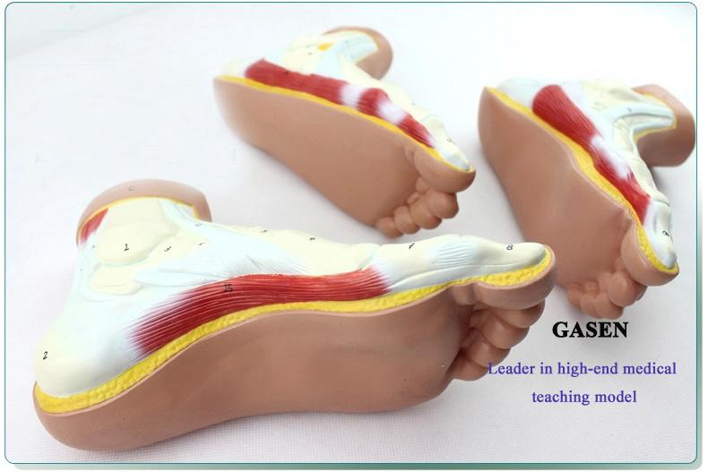 Foot model4