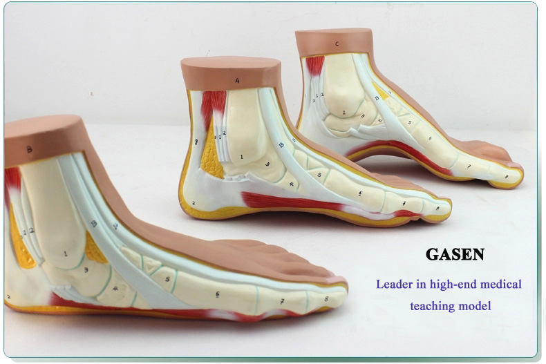 Foot model7