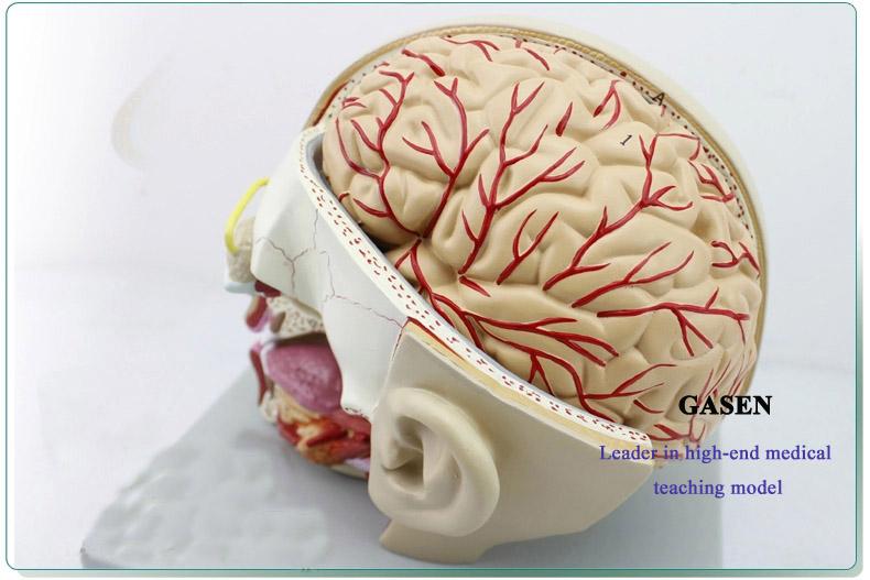 Mind Anatomy Model05