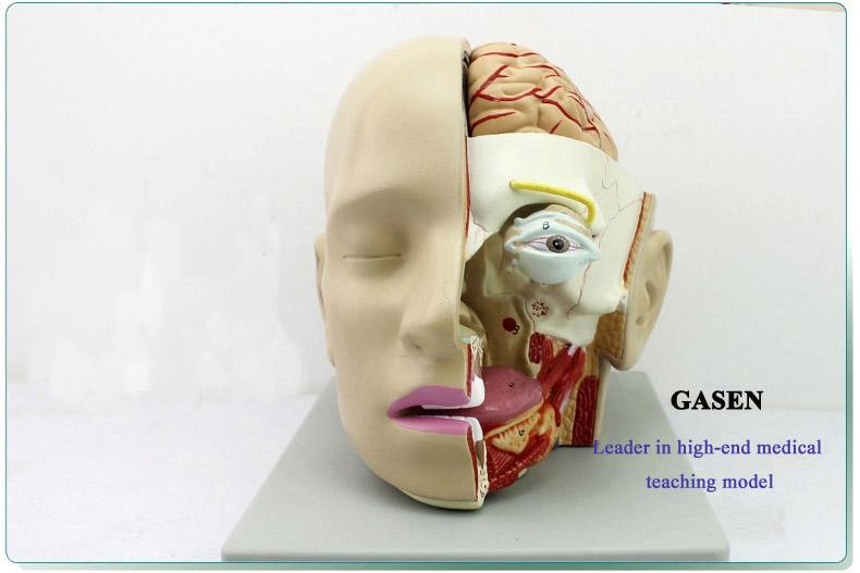 Mind Anatomy Model06