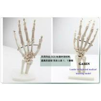 LIFE-SIZE HAND JOINT HUMAN KNUCKLES BONE MODEL HUMAN SKELETON MODEL HAND JOINT MODEL-GASEN-GL022