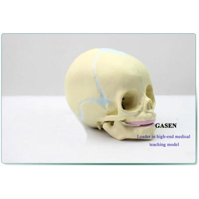 SENIOR BABY SKULL MODEL FETAL SKULL MODEL BABY SKULL REPLICA RESIN SIMULATION ANATOMICAL FETAL CRANIAL MODEL-GASEN-GL049