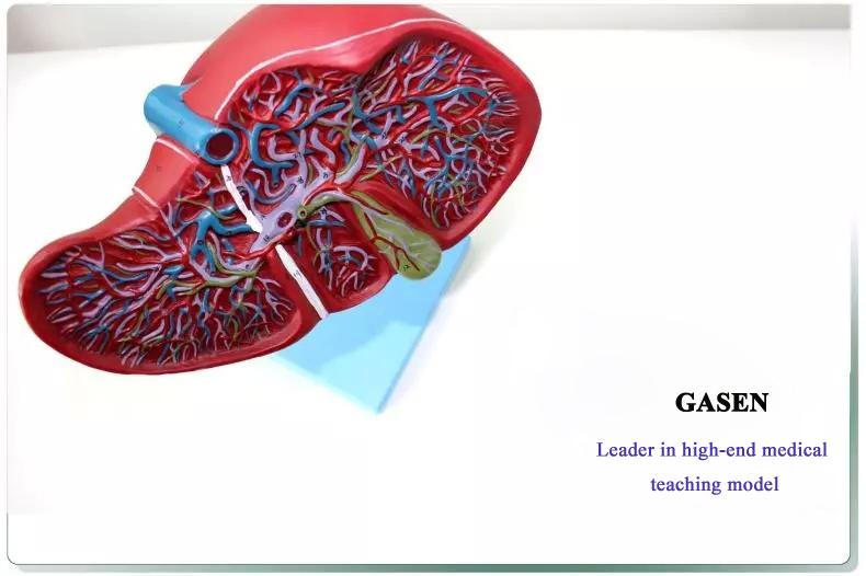 hepatocystic2