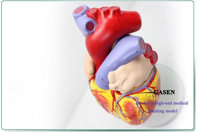 heart05