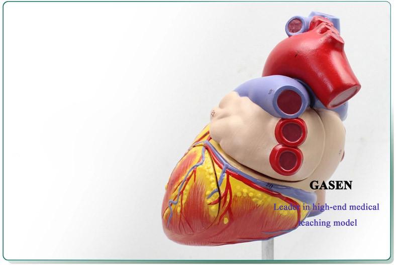 heart07