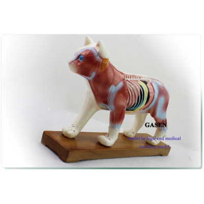 ANATOMY MODELS THE CAT ACUPUNCTURE MODEL-GASEN-DW002