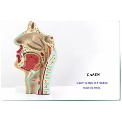 HUMAN NASAL THROAT ANATOMICAL MODEL NASOPHARYNX MODEL ENT MEDICAL MODEL NASOPHARYNGEAL CAVITY MODEL-GASEN-HX001