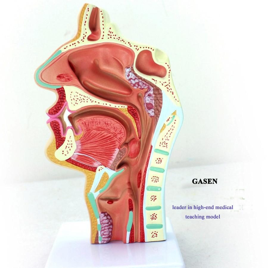 nasopharyngeal cavity5