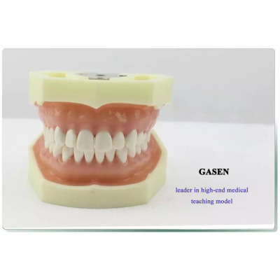 PROSTHODONTICS PRACTICE TEACHING MODEL DENTISTRY PREPARED TEETH SYSTEM PREPARATION OF GINGIVAL SIMULATION TEETH ORAL TEACHING MODEL-GASEN-KQ004