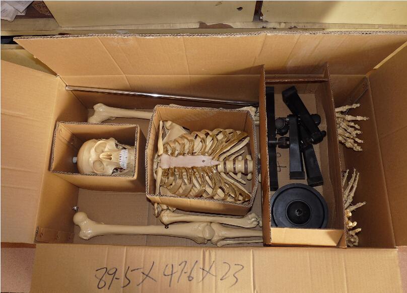 medical model Packing-1