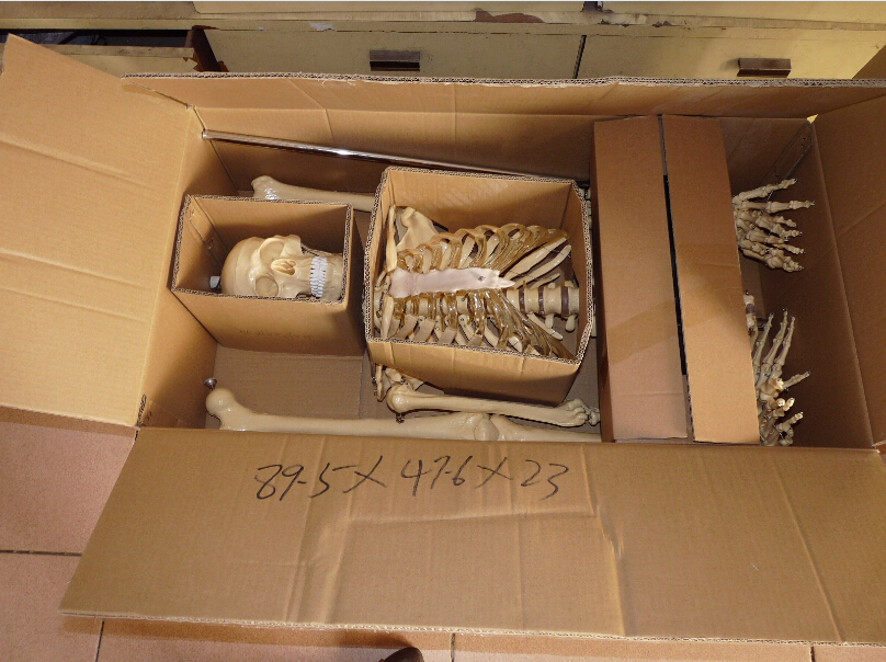 medical model Packing-2