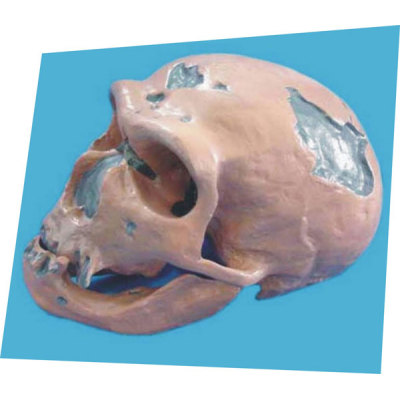 NEANDERTHAL MAN SKULL TEACHING HUMAN SKELETON MEDICAL SIMULATION HUMAN SKULL SIMULATION HEAD MODEL NEANDERTHAL SKULL -GASEN-RZGL038