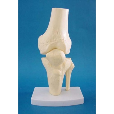 ENVIRONMENTAL PVC MATERIAL MEDICAL TEACHING HUMAN SKELETON MODEL BONE SURGERY PRACTICE KNEE GASEN-RZGL055