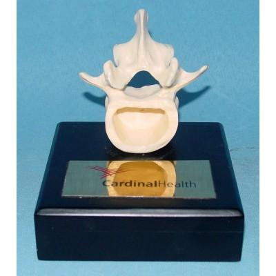 ENVIRONMENTAL PVC MATERIAL MEDICAL TEACHING HUMAN SKELETON MODEL BONE SURGERY PRACTICE VERTEBRA -GASEN-RZGL064