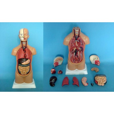 ENVIRONMENTAL PVC MATERIAL MEDICAL ANATOMICAL TORSO ANATOMICAL MODEL STRUCTURE HUMAN ORGAN SYSTEM INTERNAL ORGANS 45CM TRUNK LEG ANATOMY -GASEN-RZJP018