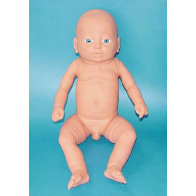 ENVIRONMENTAL PVC MATERIAL HUMAN REPRODUCTIVE SYSTEM MODEL HUMAN REPRODUCTIVE SYSTEM MODEL MEDICAL ANATOMICAL MALE BABY MODELS -GASEN-RZMN004